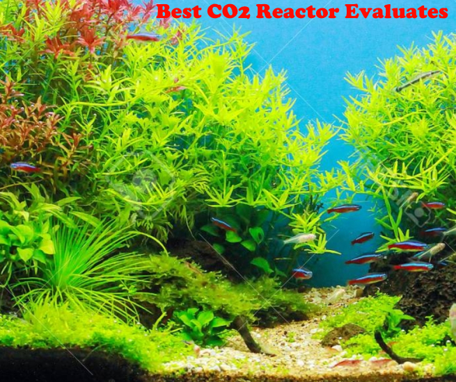 Best CO2 Reactor Evaluates