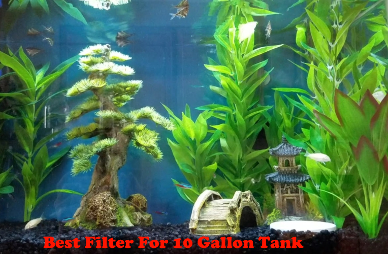 Best Filter For 10 Gallon Tank