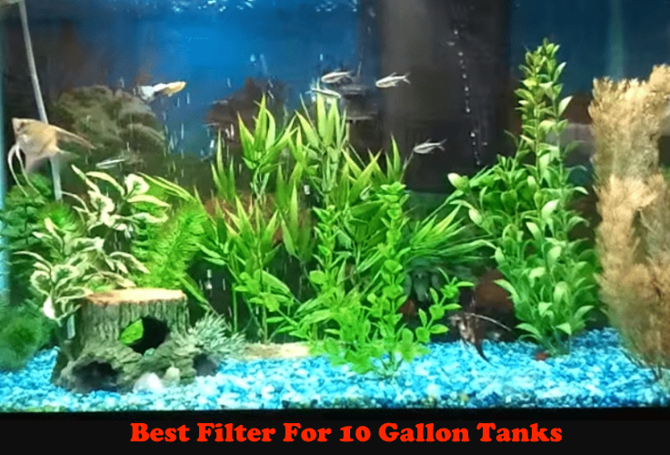 Best Filter For 20 Gallon Tanks